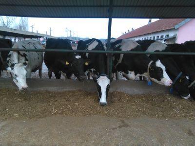 ce-sume-vor-fi-alocate-in-campania-2018-pentru-crescatorii-de-animale