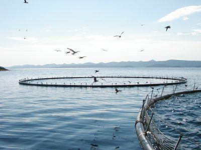 programul-operational-pentru-pescuit-ce-va-efectua-plati-saptamana-viitoare