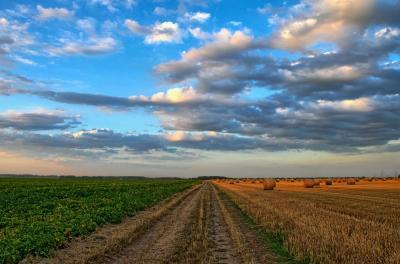 afir-trei-noi-linii-de-finantare-pentru-fermieri