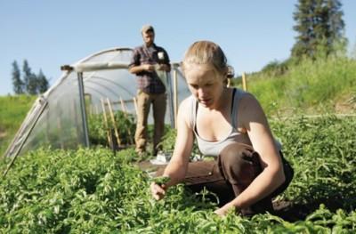 tinerii-fermieri-au-solicitat-apdrp-peste-272-milioane-de-euro-intr-o-singura-sesiune
