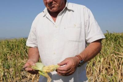 in-covasna-fermierii-afectati-de-seceta-au-inceput-deja-sa-ceara-certificate-de-forta-majora
