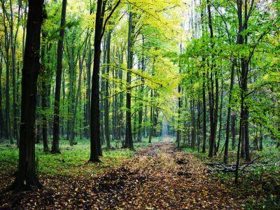 ministerul-apelor-si-padurilor-a-infiintat-doua-grupuri-de-lucru-destinate-exclusiv-problemelor-din-dmeniul-forestier