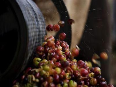 conditii-de-eligibilitate-pentru-obtinerea-de-finantari-destinate-procesarii-fructelor