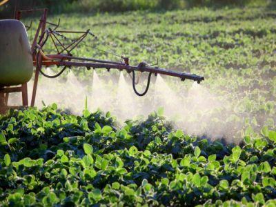 ce-sunt-fungicidele-si-cum-trebuie-utilizate-in-culturile-agricole