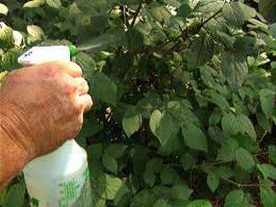 tot-ce-trebuie-sa-stie-un-bun-fermier-despre-fungicide