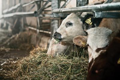 in-atentia-fermierilor-si-producatorilor-de-furaje