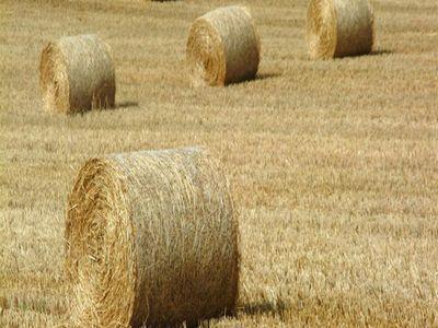 ce-trebuie-sa-stie-fermierii-despre-producerea-si-depozitarea-furajelor