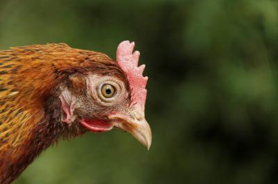 cnscbt-masuri-generale-necesare-pentru-populatie-privind-gripa-aviara