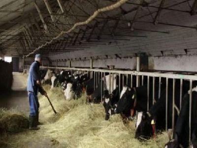 vine-frigul-ce-masuri-trebuie-luate-pentru-protejarea-animalelor
