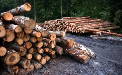 industria-lemnului-ajutata-cu-granturi-de-200000-euro