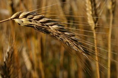 lapar-le-recomanda-fermierilor-sa-nu-vanda-cereale-in-aceasta-perioada