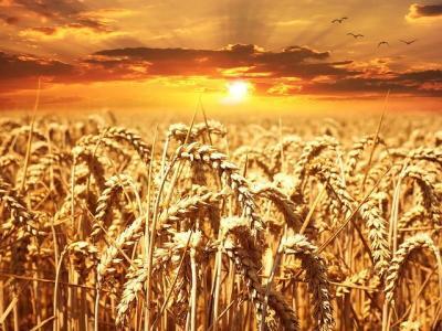 deficitul-global-de-cereale-corectat-in-2021