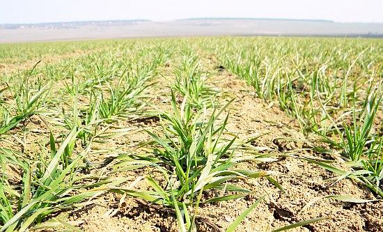 Îngrăşăminte minerale acceptate în sistemul de agricultură ecologică