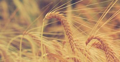 agricultorii-din-franta-aliati-in-cooperative-mari-de-frica-rusiei