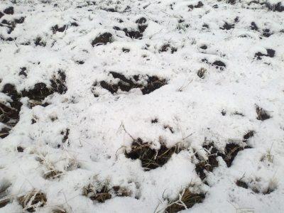 prognoza-meteo-pana-pe-20-ianuarie-ce-temperaturi-vom-avea-si-unde-va-mai-ninge-in-tara