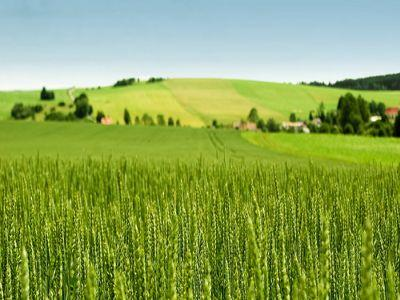 buletin-agrometeorologic-pentru-perioada-27-mai-2-iunie