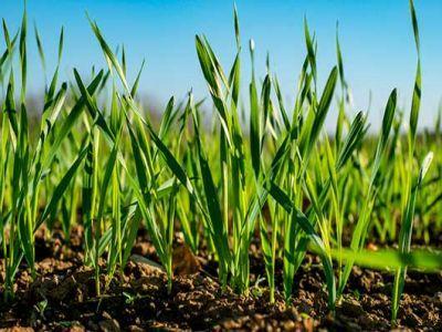 buletin-agrometeorologic-pentru-perioada-26-30-martie