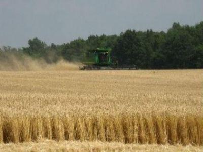 productiile-record-din-agricultura-au-scazut-pretul-alimentelor