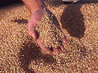 egiptul-a-confirmat-oficial-ca-va-accepta-importul-de-grau-romanesc-pe-care-il-refuzase-initial