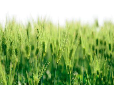 fermierii-pot-depune-cererile-pentru-masurile-de-mediu-si-clima-din-pndr-2014-2020