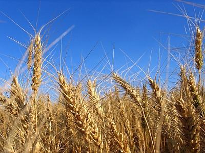 vezi-aici-ce-tara-acorda-cele-mai-mari-subventii-din-lume-pentru-agricultura