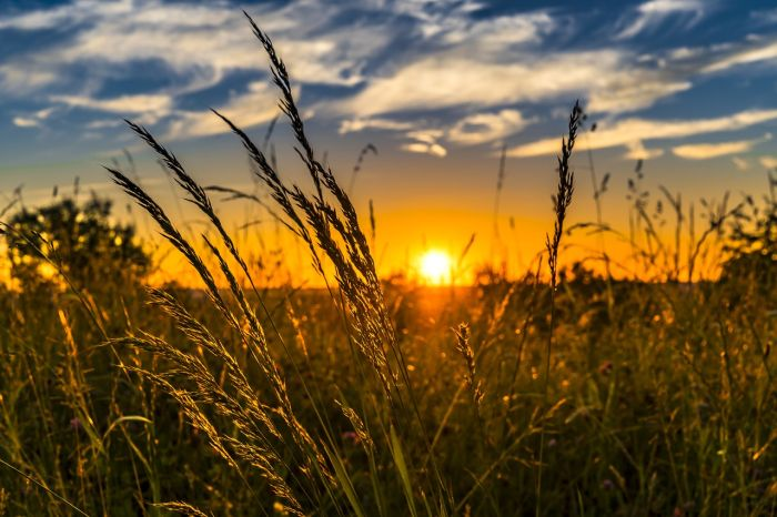 graul-cel-mai-exportat-produs-agroalimentar-romanesc-le-finele-anului-trecut