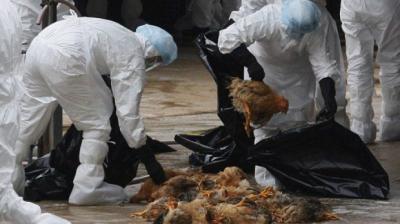 sprijin-urias-pentru-italia-dupa-ce-a-fost-afectata-de-gripa-aviara