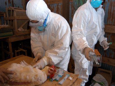 controale-la-fermele-de-pasari-dupa-semnalarea-reaparitiei-virusului-gripei-aviare