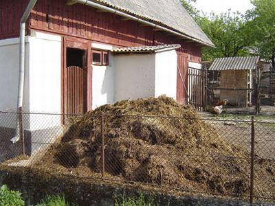 gunoiul-de-grajd-potential-pericol-pentru-sanatate