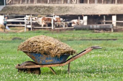 romania-imprumuta-48-de-milioane-de-euro-pentru-investitii-in-vederea-controlului-poluarii-cu-nutrienti