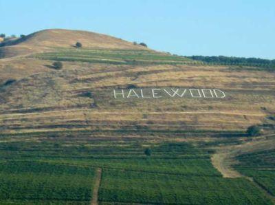 vinurile-romanesti-castiga-tot-mai-multe-medalii-la-concursurile-internationale