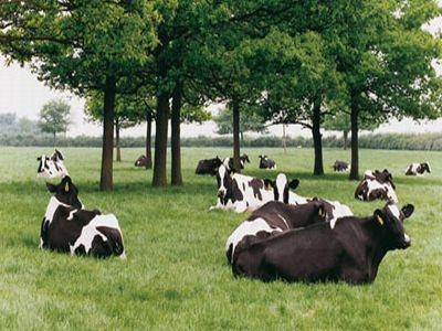 asociatia-crescatorilor-de-vaci-holstein-are-un-nou-presedinte