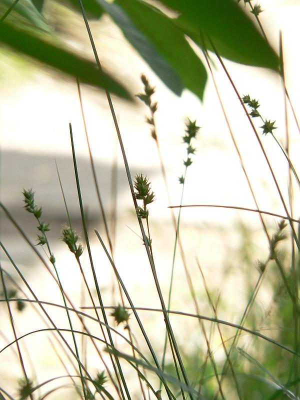 iarba-fiarelor-intre-mit-si-realitate