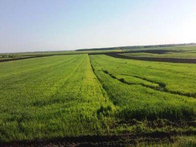 buletin-agrometeorologic-pentru-perioada-30-mai-5-iunie