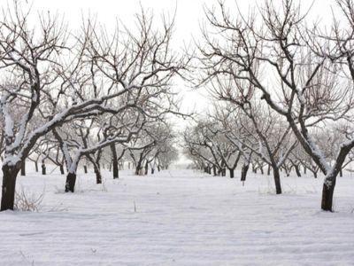 solutii-pentru-protejarea-pomilor-din-livada-impotriva-rozatoarelor-in-sezonul-rece