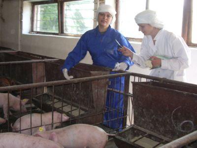 oua-imbogatite-cu-omega-3-si-carne-de-porc-cu-mai-putin-colesterol-proiecte-drulate-la-ibna-balotesti