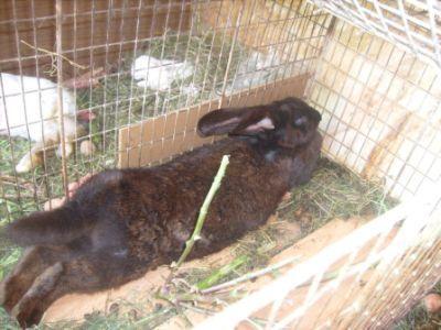 ferma-traditionala-de-iepuri-pariul-castigator-pentru-un-zootehnist-clujean