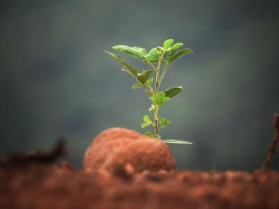 5-tehnici-de-plantare-cu-rezultate-sigure-pentru-incepatori