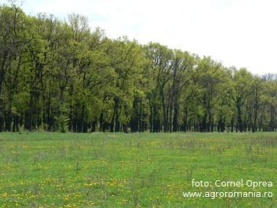 federatia-proprietarilor-de-paduri-si-pasuni-din-romania-cere-mai-multe-fonduri-pentru-sectorul-forestier