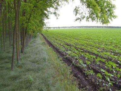 ce-categorii-de-fermieri-pot-beneficia-de-subventia-pentru-impadurire