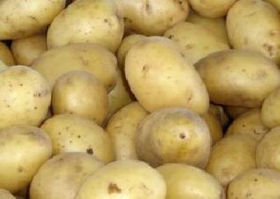 desi-producem-destul-importurile-de-cartofi-inregistreaza-cresteri