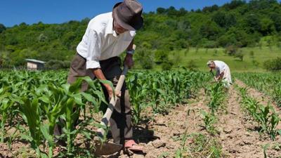 cine-plateste-impozitul-pe-venit-agricol