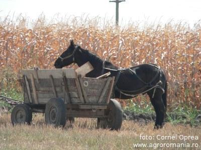 vor-sa-impoziteze-micii-producatori-agricoli-ai-un-solar-vezi-ce-ti-ar-putea-lua-guvernul