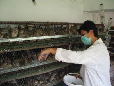 incubatoarele-de-prepelite-o-afacere-tot-mai-raspandita-printre-fermieri