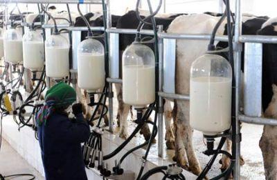 statistici-industria-laptelui-in-luna-ianuarie-2013