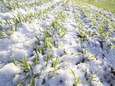 primele-estimari-ale-pagubelor-produse-in-agricultura-de-fenomenele-climatice-din-ultima-perioada