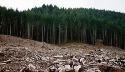 inventarul-forestier-national-contine-date-inexacte