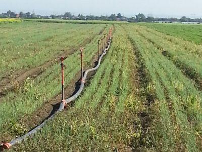 sistemele-de-irigatii-vor-fi-indispensabile-in-acest-an-din-cauza-secetei
