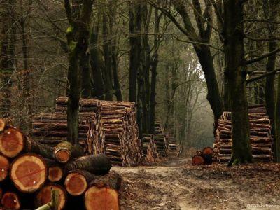 smurd-ul-padurilor-si-jandarmeria-silvica-solutii-pentru-stoparea-jafului-forestier