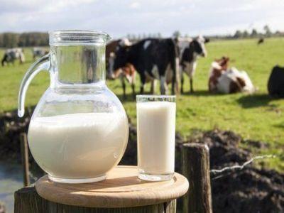 vacile-de-lapte-din-romania-au-una-din-cele-mai-scazute-productivitati-din-uniunea-europeana